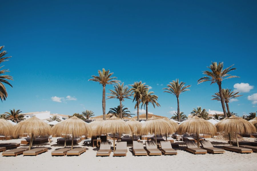 Sun loungers with blue sky and palm trees at Beachouse Ibiza